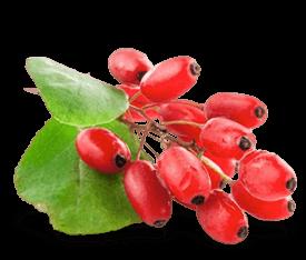 Get Fit to Fight Elderberry